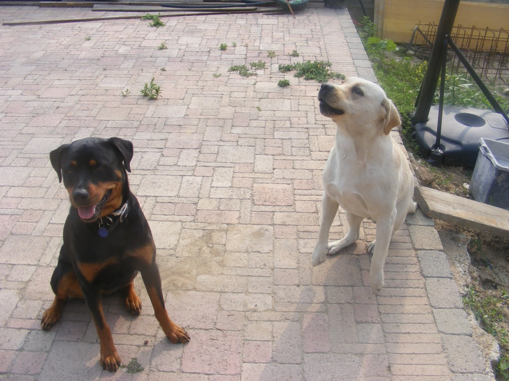 Dog Aggression Training Tampa