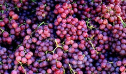 Any color grapes will work for this recipe.