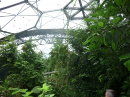 Looking up through the foliage in the Tropical biome