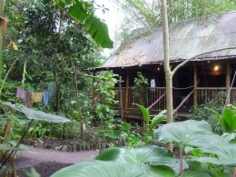 A Malaysian homestead in the Tropical biome.