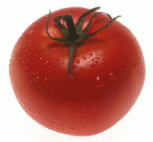 Growing tomatoes organically is just as easy as conventional farming!