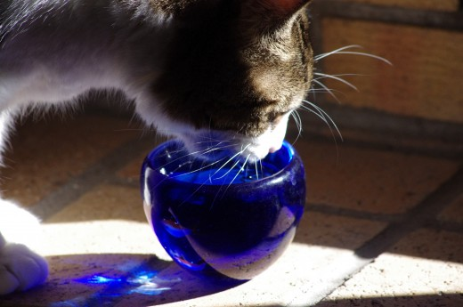 Cat with Blue Bowl