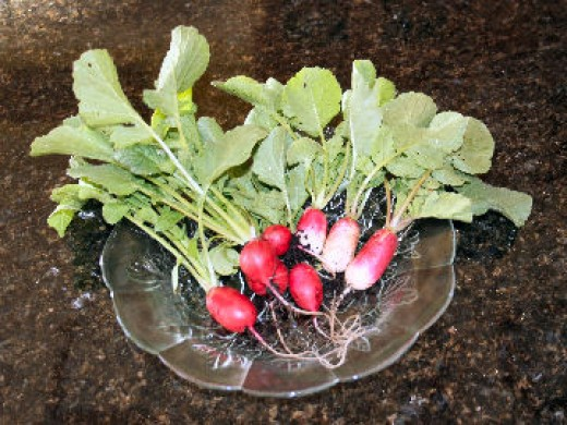 Radishes are easy to grow vegetables.
