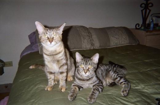 Ramona (left),  Bailey (right)