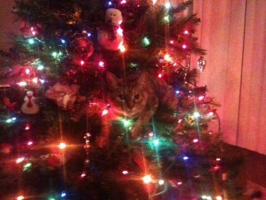 """""""My tree!' -Ramona"""