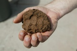 How to Improve Clay Soil and Poor Garden Drainage