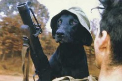 Nam's Dog Soldiers
