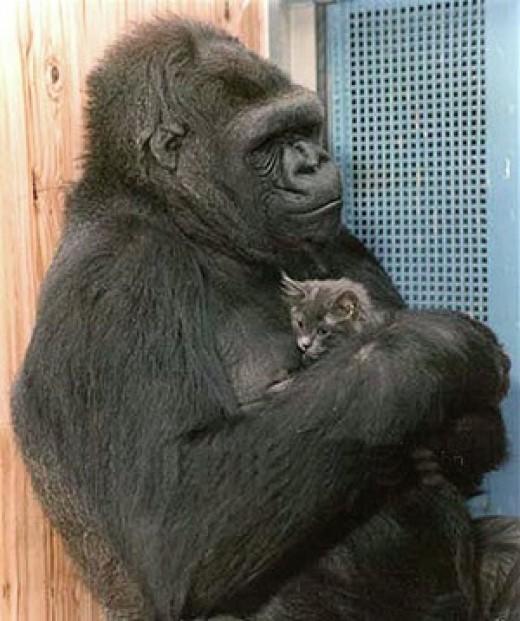Koko giving love to her feline friend.