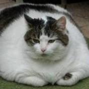 Fat-no-more profile image