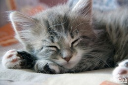 Even Sleeping Kittens Contribute to Humidiy in Your Home