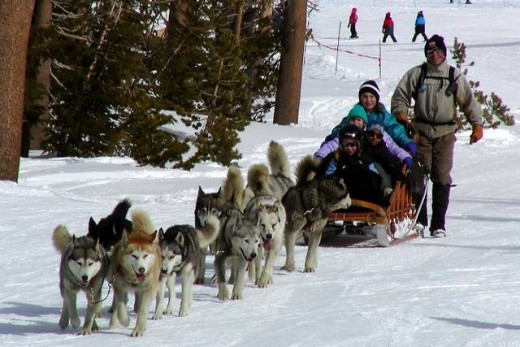 I used to do it with two German Shepherds and an old wooden children's sled. What a race it was!
