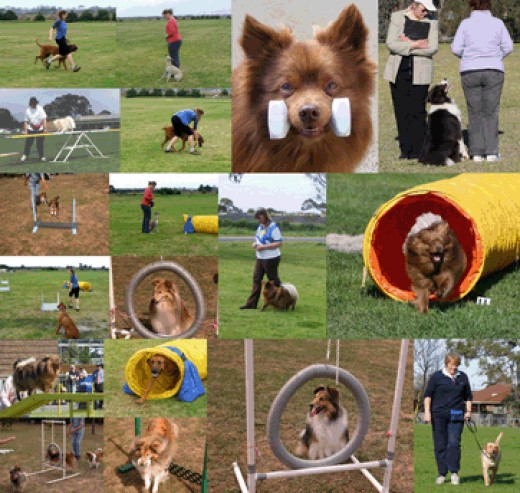 Agility, a mix of obedience and the ability to overcome a variety of obstacles!