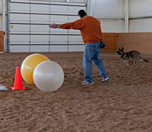 It's a combination of Obedience and Herding. The  dog has to use his nose or shoulder to drive eight balls into a goal.