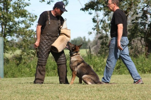 It takes a lot of control and obedience to ensure the dog's attack-force is contained into reasonable measures and nobody gets hurt (unless it is a real attack!).