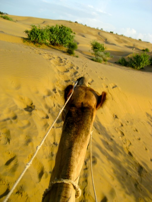 Atop a camel through the sand dunes