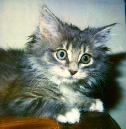 Scaredy-Cat or Fraidy Cat