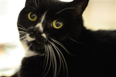 Mollie is 11 years old and is available for adoption through the Animal Refuge League of Greater Portland.