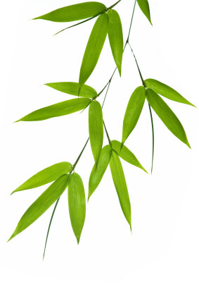 Real Bamboo Leaves