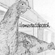 homesteadpatch profile image