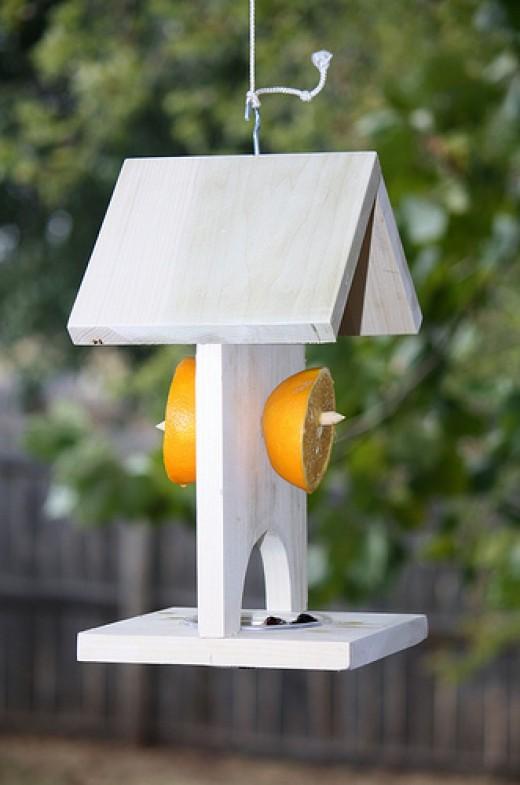 Orange feeder