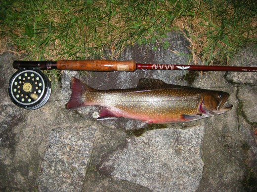 Large Brook Trout caught at Profile Lake, New Hampshire