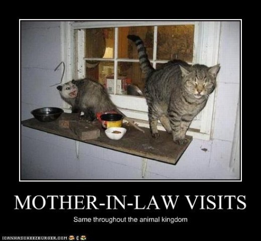 Funny Birthday Meme For Mother In Law : How to deal with bad in laws