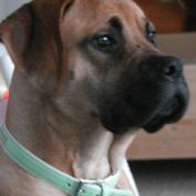 Isabellas profile image