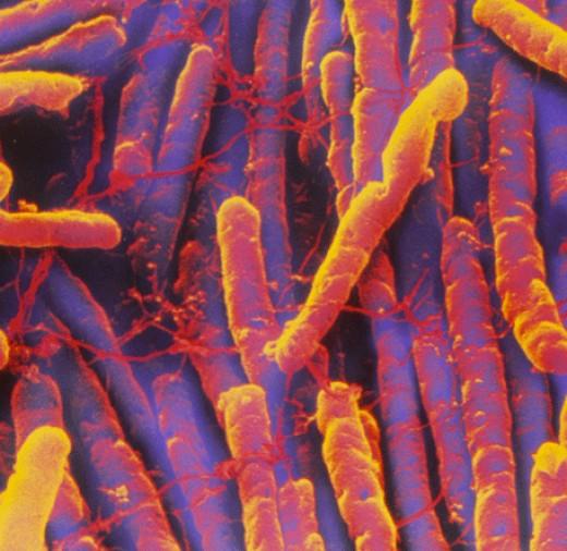 Clostridium difficile