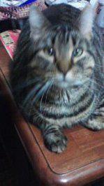 Shasha on the table