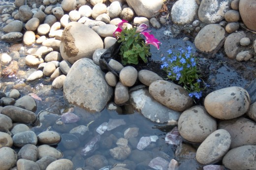 A creek bed with delicate pink blooming plant peeking out from among the river rock.