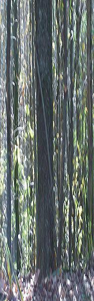- Forest Floors -