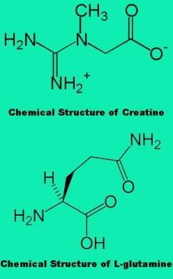 Creatine vs Glutamine - What are they?