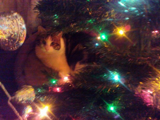 Hunter loves the Christmas tree.