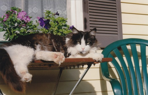 Here she is, no longer young, sunning herself on the front veranda of our former home.