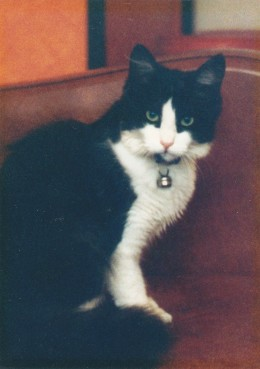 A family member for nine years, this lovely animal was much loved and remains forever in our hearts.