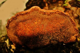 This fungus has an amazing variety of colors and textures.
