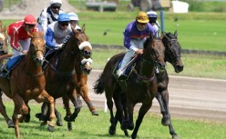 Horse racing facts