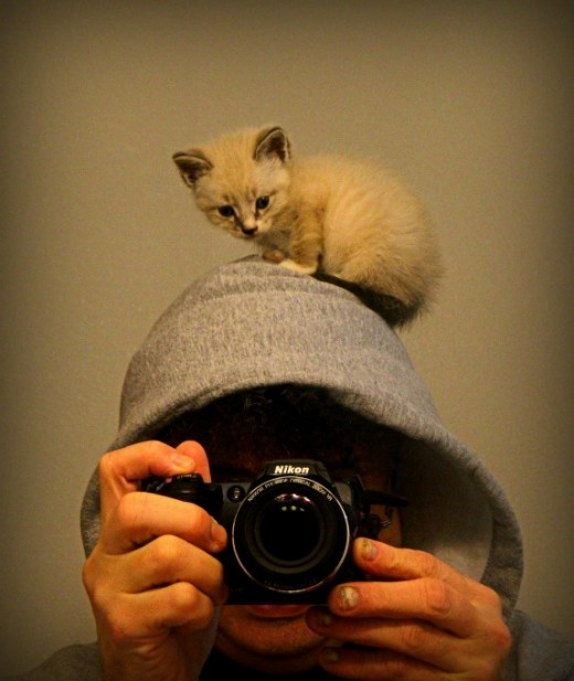 Kitten headshot photo for Craigslist personals