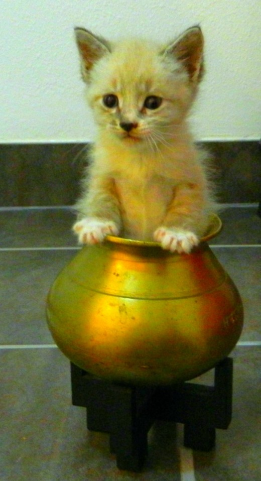 Kitty in a pot