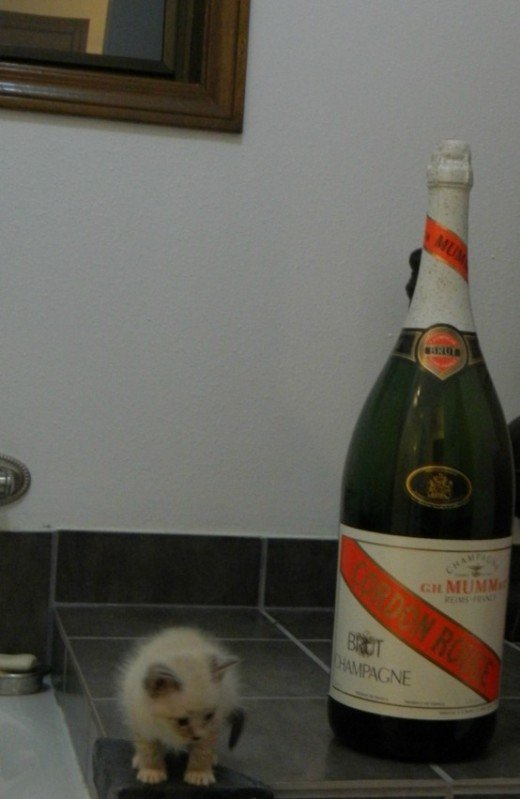Tiny kitten compared to wine bottle size.