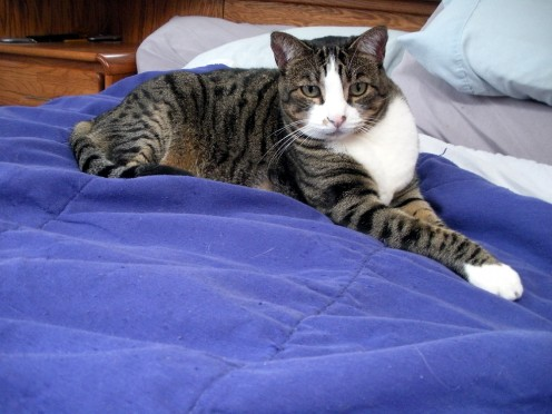 Munchkin was adopted in 2004, and is now, (as of 2016) the most senior cat in the home