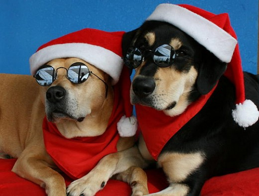 Have a Nice Beautiful Christmas from SPCA Support & Protecting the Rights of Animals. Source: flickr.com