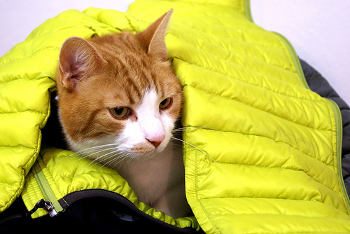 Cats like packable down jackets as a cozy bed.