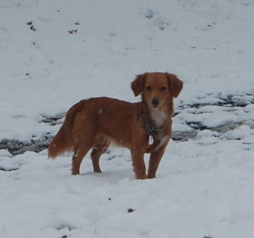 Shelby.  We call her a Golden Weenie. She is the sweetest thing, but she was considered 'too' loving!