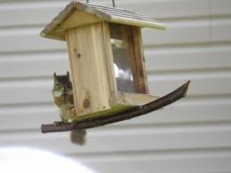 Joe on his squirrel swing