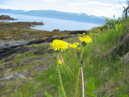 From this vantage point, dandelions are gorgeous.