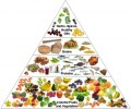 Information to Help Dieters Stay Healthy, Strong, and Content