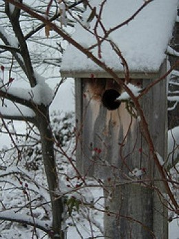 Birdhouse in Winter