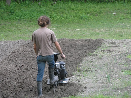 Good tilling is an important basic step.