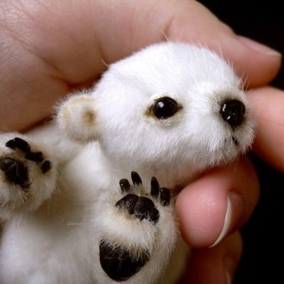 Adorableness - A by-product of evolution